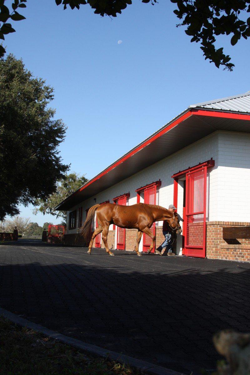 Bridlewood Farm ¥ November 2009