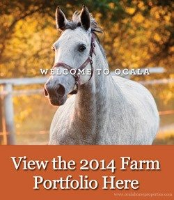 Ocala, Florida Horse Farms for Sale Portfolio
