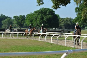 Horses in Training at Niall Brennan's Legendary Ocala Training Center