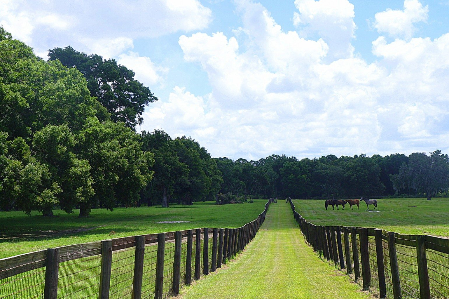 Double S Farm Ocala Horse Farm For Sale Ocala Horse