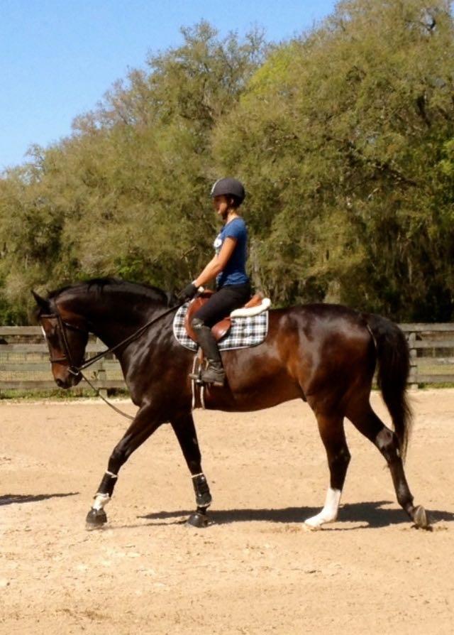 Horses N Heroes Summer 2016 Update Ocala Horse Properties